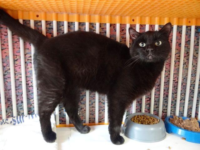 noir ébène noir chatte femme noire homme blanc ayant le sexe